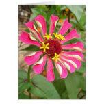 Zinnia multicolor tarjeta pequeña
