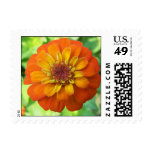 Zinnia Postage Stamps