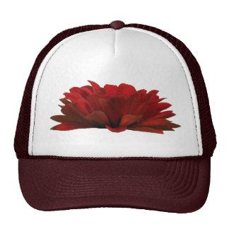 Zinnia rojo oscuro gorra