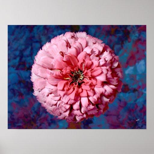 Zinnia rosado póster