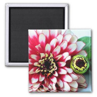Zinnia Wink 2 Inch Square Magnet