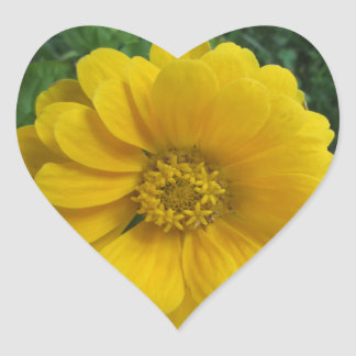 Zinnia Yellow Golden Flower Heart Sticker