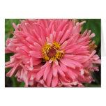 Zinnina rosado Notecard Felicitación