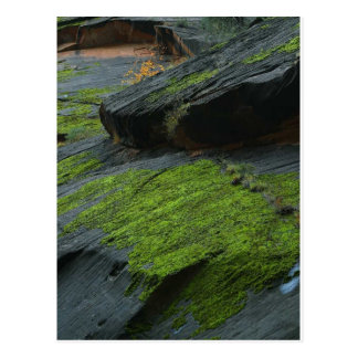 Zion Canyon Moss Post Cards