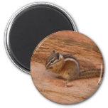Zion Chipmunk Magnet