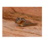 Zion Chipmunk on Red Rocks Postcard