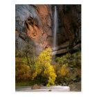 Zion National Park, Utah. USA. Ephemeral Postcard