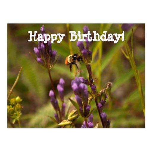 Zippy Bee; Happy Birthday Postcard