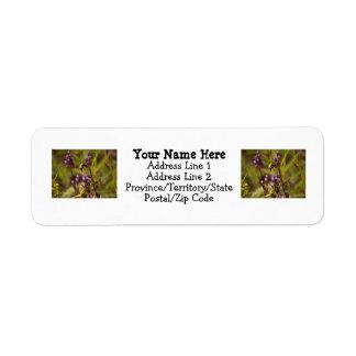 Zippy Bee Custom Return Address Labels