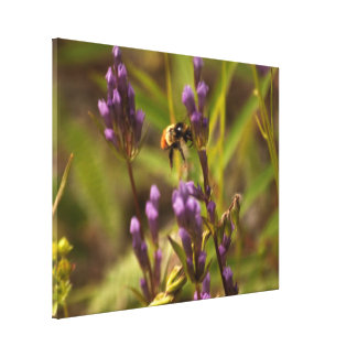 Zippy Bee; No Text Gallery Wrapped Canvas