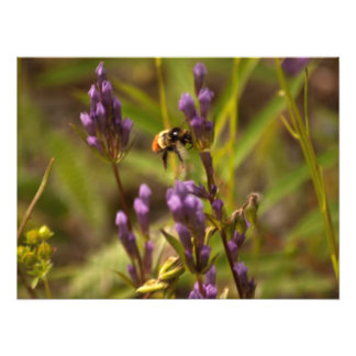 Zippy Bee; No Text Photograph