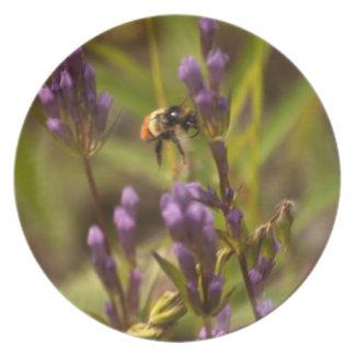 Zippy Bee; No Text Plate