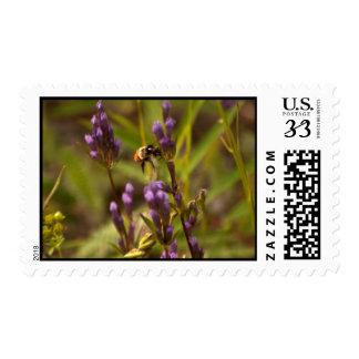 Zippy Bee; No Text Postage Stamp