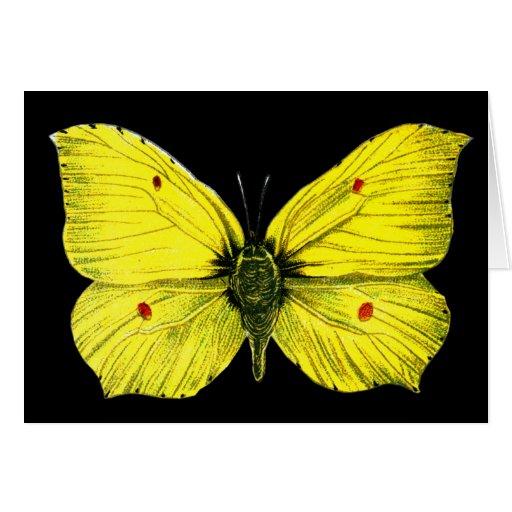 Zitronenfalter Card