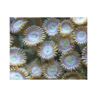 Zoanthid Corals III - The Reef Collection Canvas Print