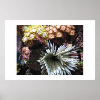 Zoanthids y plumero de la pluma posters