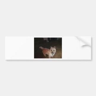 Zoe Cairn Terrier Bumper Sticker