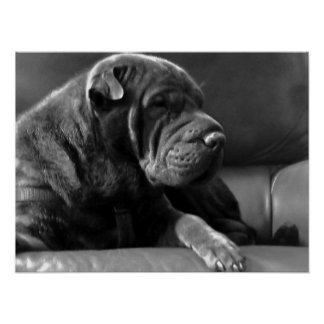 Zoey: Shar-Pei Dog Posters