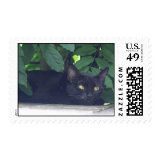 Zoey the cat postage