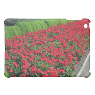 Zonal Geranium (Pelargonium Hortorum) flowe Case For The iPad Mini