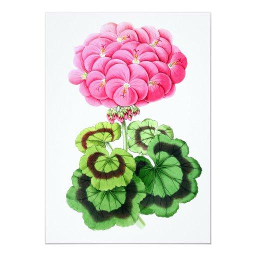 Zonale Geranium, Miss Martin 5x7 Paper Invitation Card