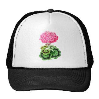Zonale Geranium, Miss Martin Trucker Hat