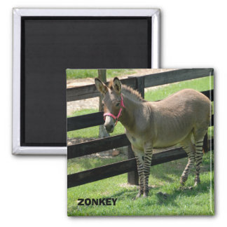 Zonkey name for part donkey and zebra 2 inch square magnet
