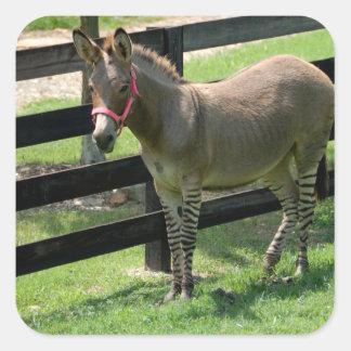 Zonkey name for part donkey and zebra square sticker
