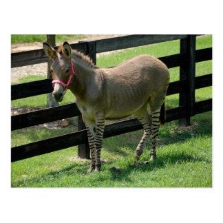 Zonkey nombró para la mezcla del burro y de la postal