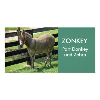 ZONKEY part Donkey and Zebra photocard Card