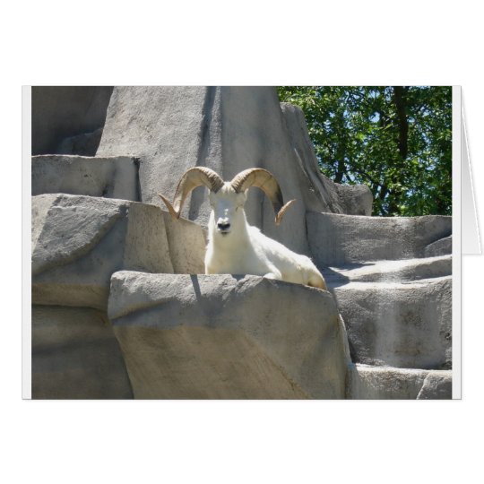 Zoo Animals Card