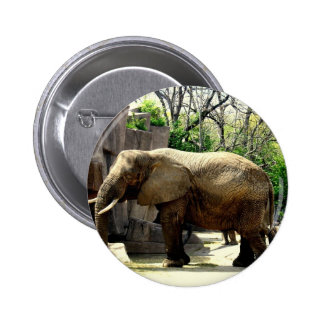 Zoo Animals Pinback Button