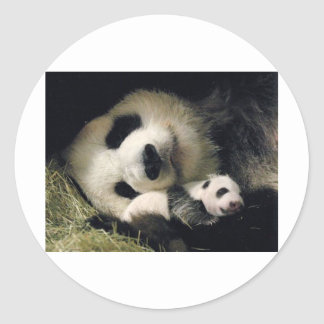 zoo-atlanta_giant_panda_lun-lun_and_cub classic round sticker
