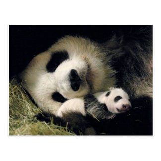zoo-atlanta_giant_panda_lun-lun_and_cub postcard