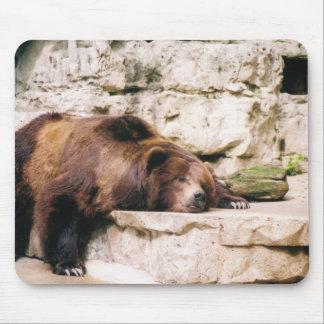 zoo bear mouse pad