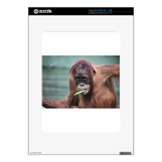 zoo decals for the iPad