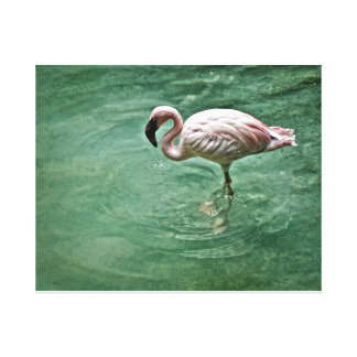 Zoo Flamingo Stretched Canvas Print