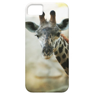 Zoo Giraffe iPhone SE/5/5s Case