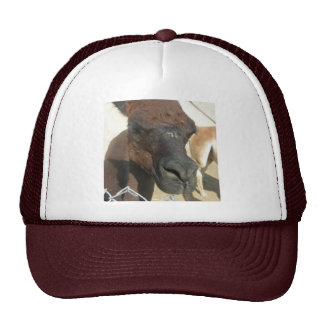zoo mesh hat