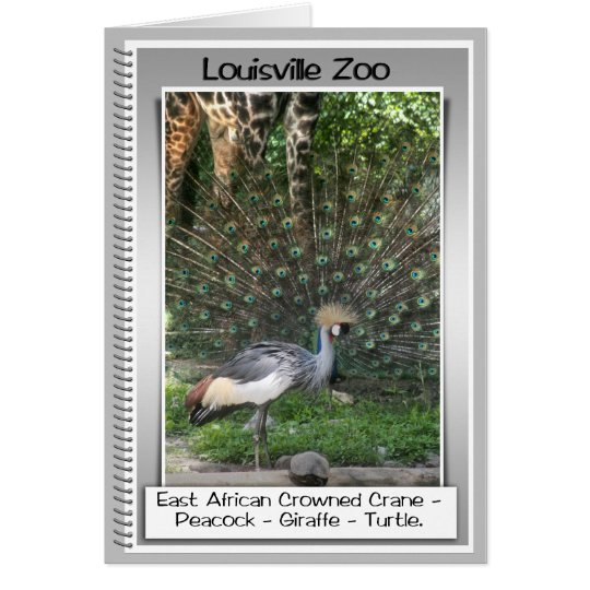 ZOO - LINE UP - PERFECT TIMING - CRANE CARD