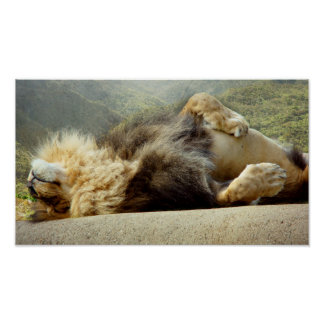 """Zoo Lion Dreaming of a Jungle 16X9"""" Poster"""