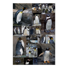 Zoo Penguins Collage Photo Poster