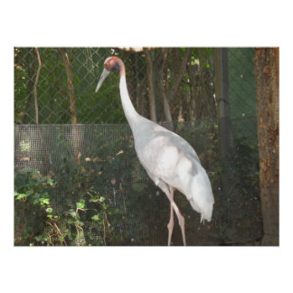 zoo Photo of a Big Bird Print