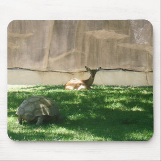 zoo pictures mouse pad