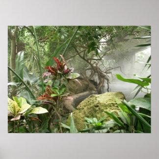 Zoo Rainforest Exhibit Poster