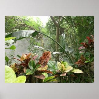 Zoo Rainforest Exibit Posters