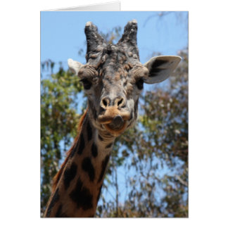 Zoo Series, Here's Lookin' At You Giraffe Greeting Card