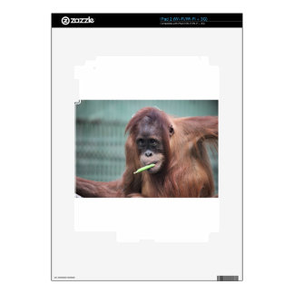 zoo skin for iPad 2