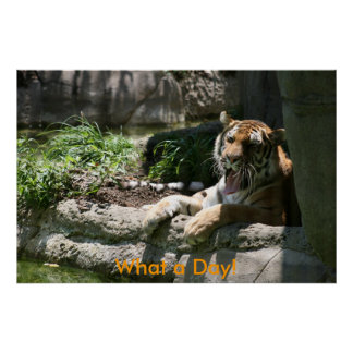 Zoo-Tiger: What a Day! Poster
