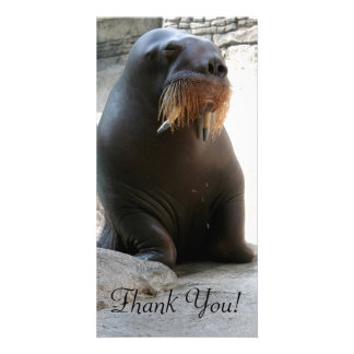 Zoo Walrus On Dry Land Looks Rather Reserved Card